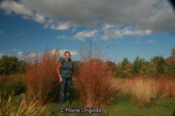 Native Prairie Grasses